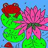 Lotus garden and frogs coloring